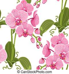 rosa, lila, muster, phalaenopsis, blumen, orchidee