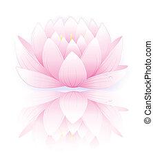 rosa, lotos