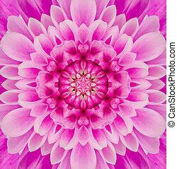 rosa, mandala, concéntrico, flor, centro, calidoscopio