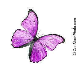 rosa, mariposa, blanco, aislado