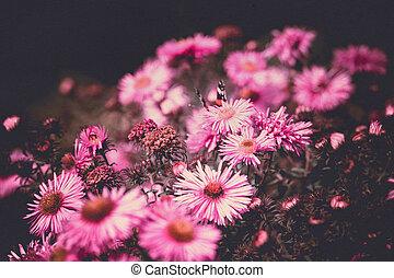 rosa, mariposa, flores, filtrado