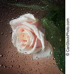 rosa, molhados
