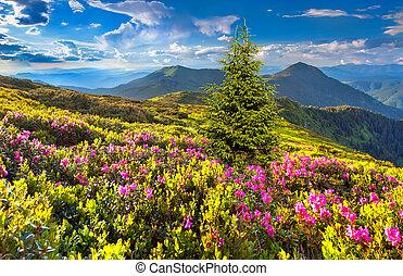 rosa, montaña, rododendro, flores, magia