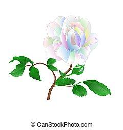 rosa, multicolored, caule, vector.eps