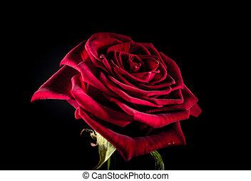 rosa, negro, salpicaduras, plano de fondo, rojo