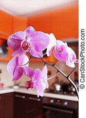 rosa, orkidéer, luxuös, kök