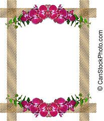 rosa, orquídeas, hiedra, frontera