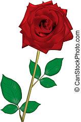 rosa, para, mi, querido