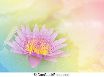 rosa, pastello, fiore, loto, dolce, sfondo colore, morbido