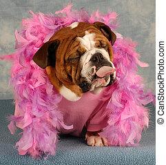 rosa, pega, perro, boa, hombre fuera de lengua
