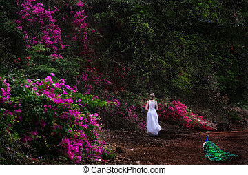 rosa, pfau, gehen, frau, kleingarten, flowers., ...