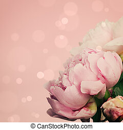 rosa, pfingstrosen, auf, pastellhintergrund
