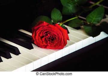 rosa, pianoforte, rosso