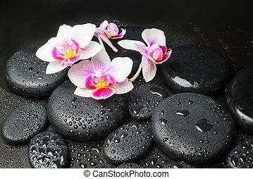 rosa, piedras, concepto, (mini, zen, phalaenopsis), flor, ...