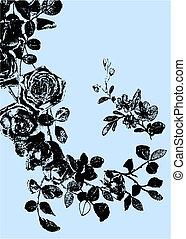 rosa, planta, dibujo, ilustración