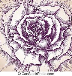 rosa, primer plano, dibujo