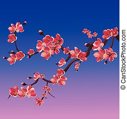 rosa, ramo, albero., ciliegia, fioritura, giapponese, illustrazione, isolato, sakura., vettore, fondo, bianco