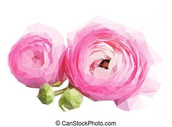 rosa, ranunculus, fiori bianchi