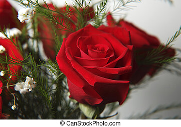 rosa roja, 2