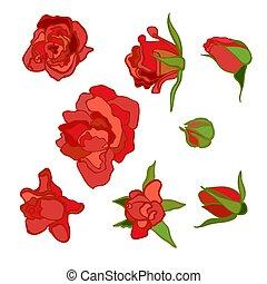 rosa roja, conjunto