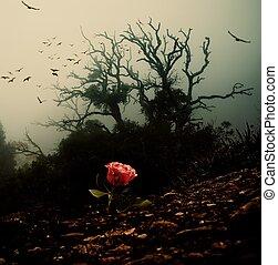 rosa roja, crecer, por, tierra, contra, fantasmal, árbol