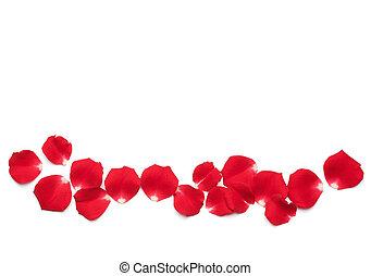 rosa roja, pétalos