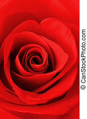 rosa roja, textura