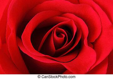 rosa, rojo, textura