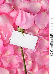 rosa, romanticos, fundo