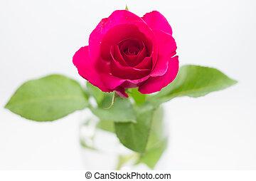 rosa,  rosÈ, vit