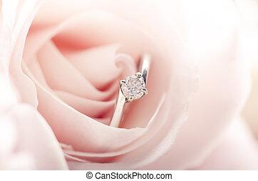 rosa rosa, ringa, förbindelse