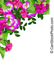 (rosa, rose, canina), chien, fond, fleurs blanches