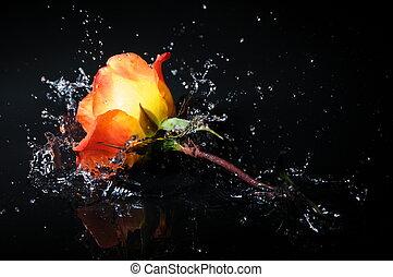 rosa, salpicadura