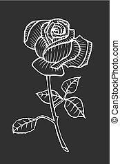 rosa, schizzo