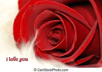 rosa, sentimental