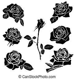 rosa, silhouette