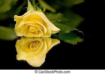 rosa, singolo, giallo