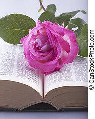 rosa, sobre, livro