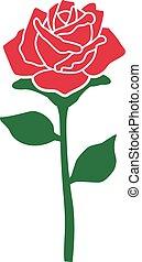 rosa sola, con, tallo