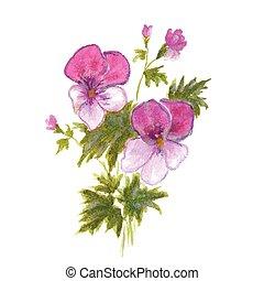Rosa, Stiefmütterchen, busch, kleingarten