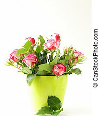 rosa strilmunstycke, på, a, vit fond