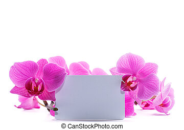 rosa, stripy, phalaenopsis, orquídea