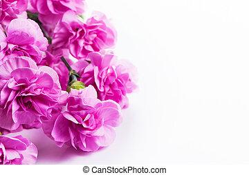 rosa, suave, flores del resorte, ramo, blanco, plano de fondo