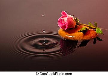 rosa subió, 1, agua