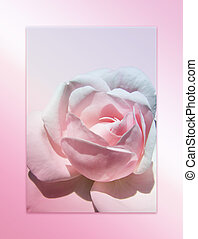 rosa subió