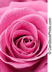 rosa subió, detail.