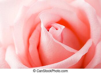 rosa subió, encima de cierre
