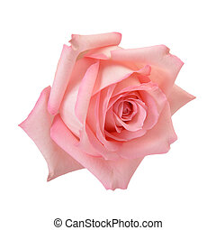 rosa subió, macro
