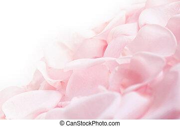 rosa subió, pétalos