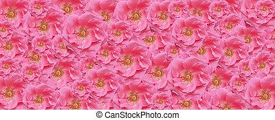 rosa subió, papel pintado, textura, floral, fondo